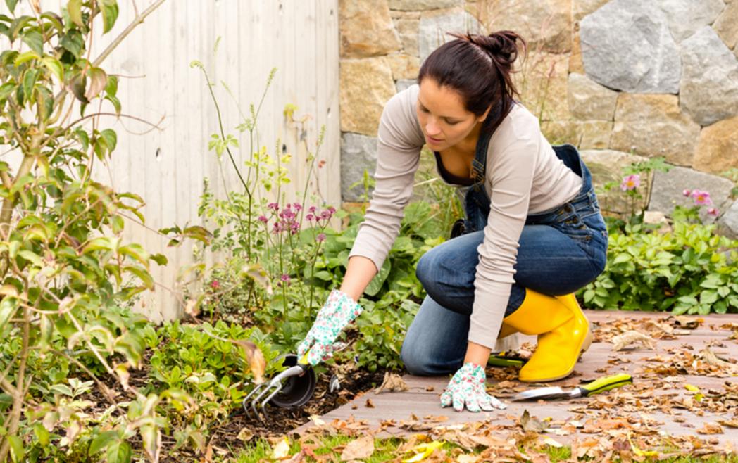 Top tips for Gardeners