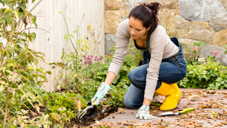 Top tips for Gardeners